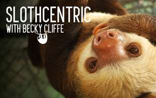 Mad about sloths: Meet our new blogger Becky Cliffe