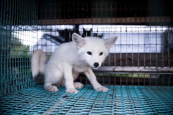 Kimi fox fur_2014_10_20