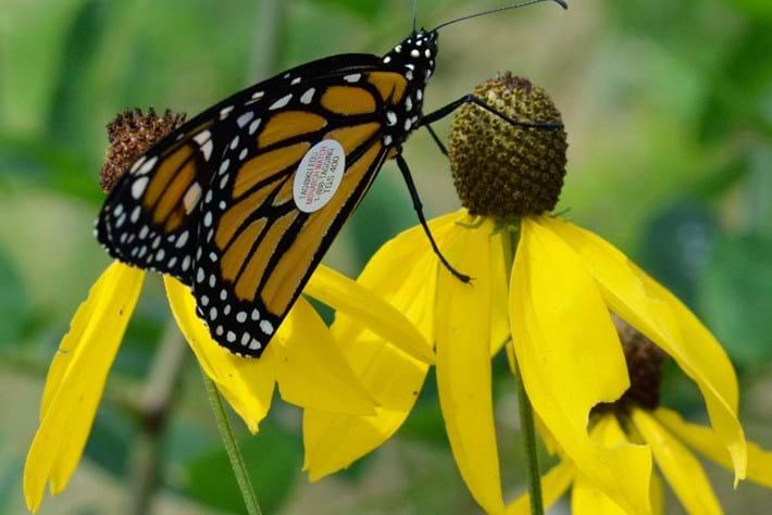 monarch-page-2014-0-23