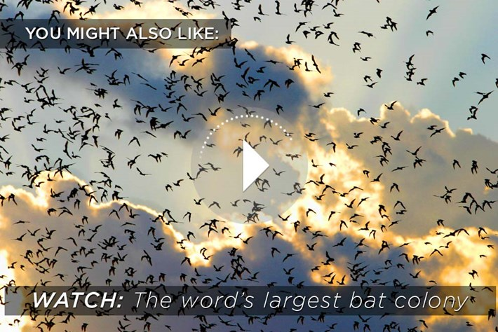 2014 10 28 Bats Related Content