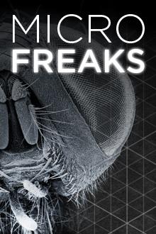 MicroFreaks