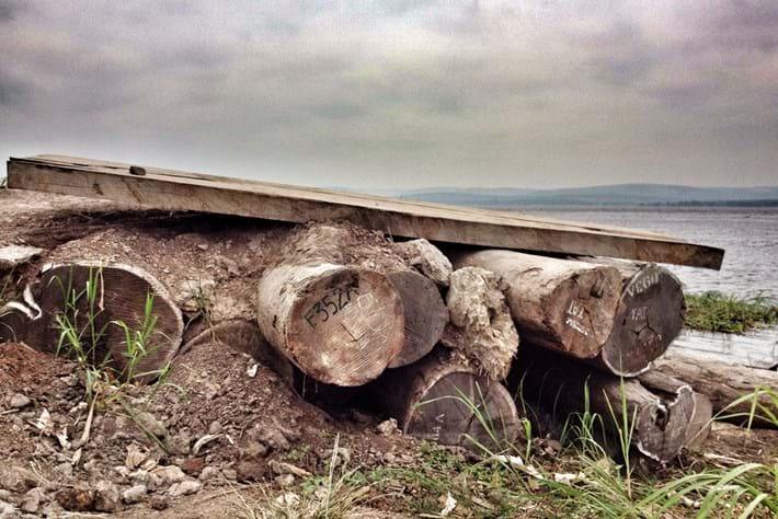 Congo Logs Deforesation 2014 11 05