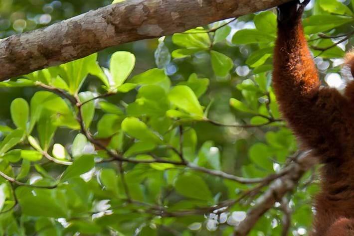lemur header_2014_11_06