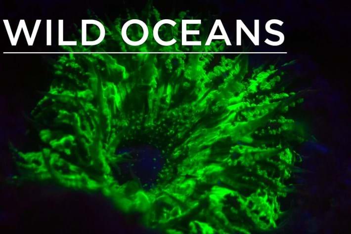 2014-11-11 Wild Oceans Earth Touch UV Flourescensce videothumb