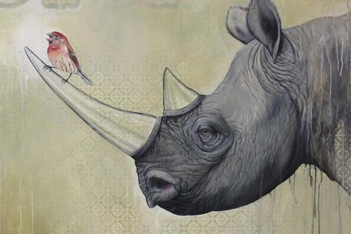 Bryan Holland Rhino 2014 11 12