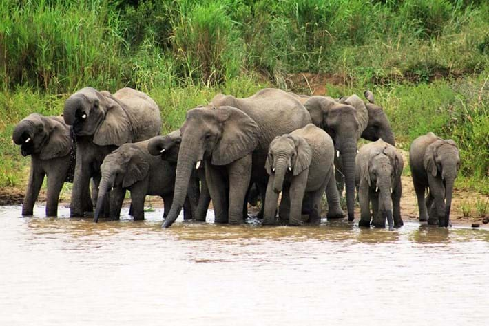 Elephants Drinking 2014 11 19