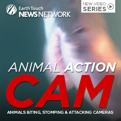 Animal Action Cam