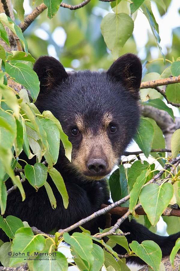 Baby Black Bear 2014 11 25
