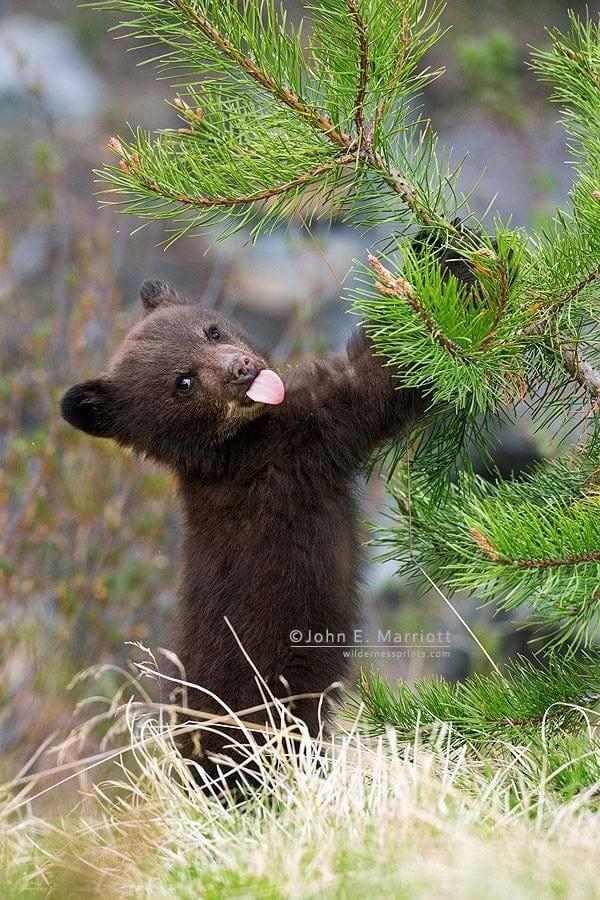 Baby Bear 2014 11 25