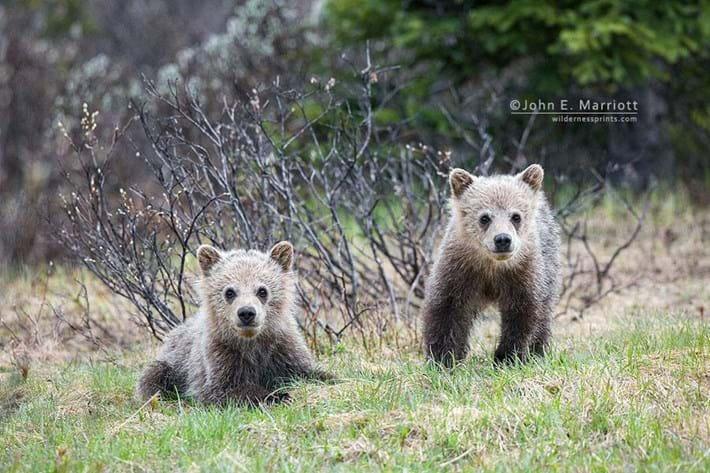 Baby Bears 2014 11 25