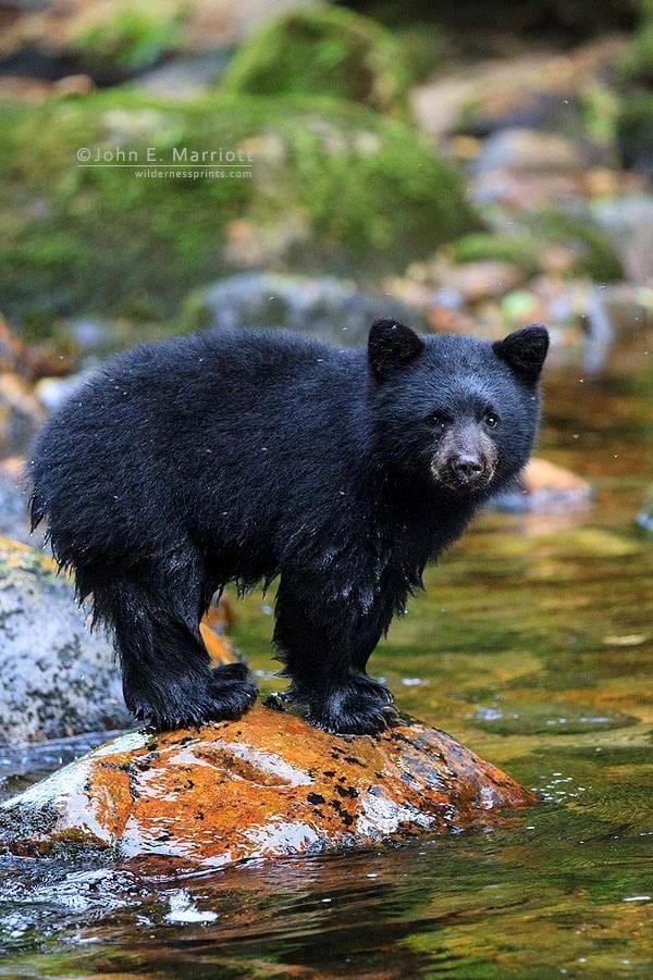 Baby Bear On Rock 2014 11 25