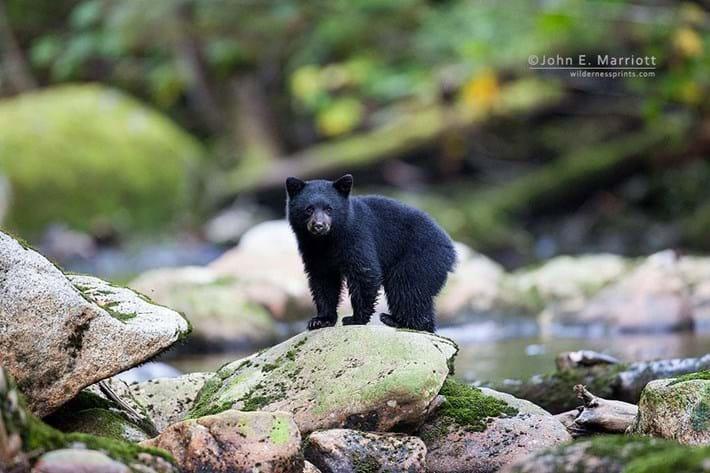 Baby Bear On Rock 2 2014 11 25