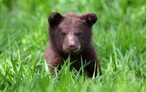 Top 10: Photos of baby bears being adorable