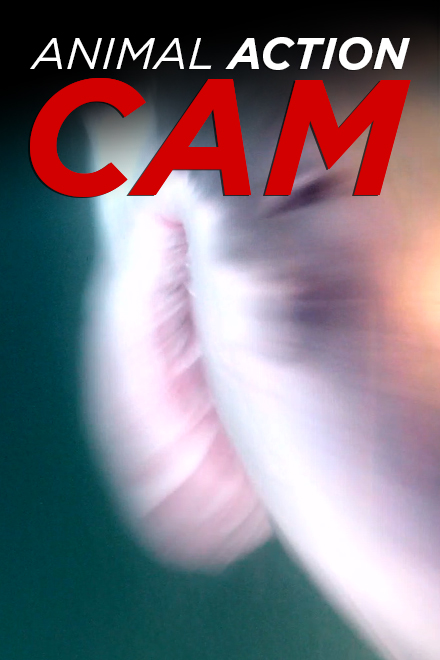 Animal Action Cam