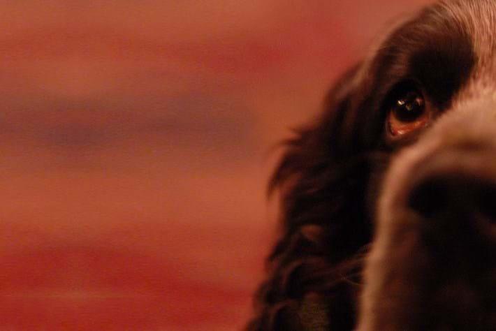 dog_header_2014_11_27