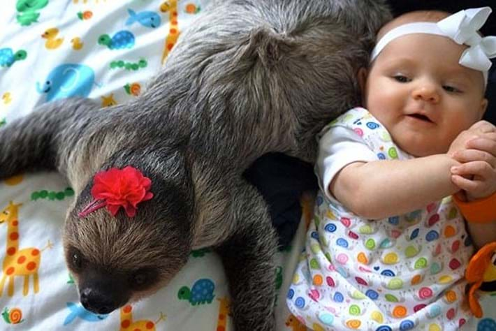 Baby -sloth -daisy -best -friends _2014_11_28