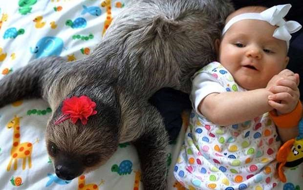 Here's why human babies should NOT be best friends with baby sloths