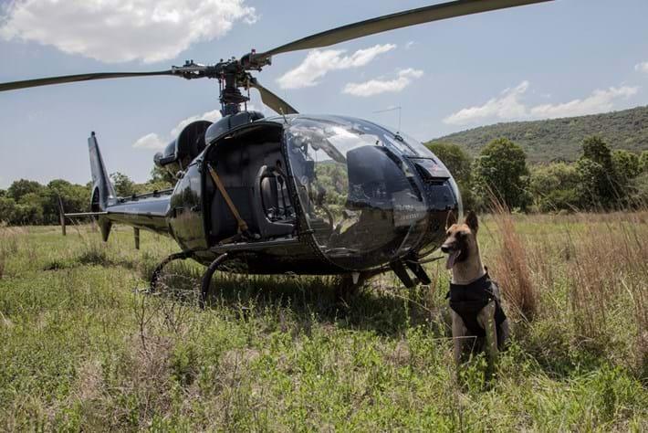 Dog Next To Chopper Pose 2014 11 28