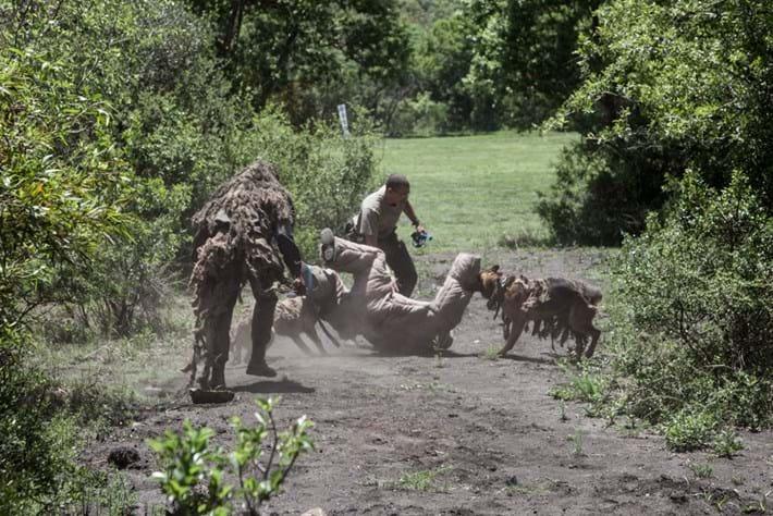 Dog Attacking Poacher 2014 11 28