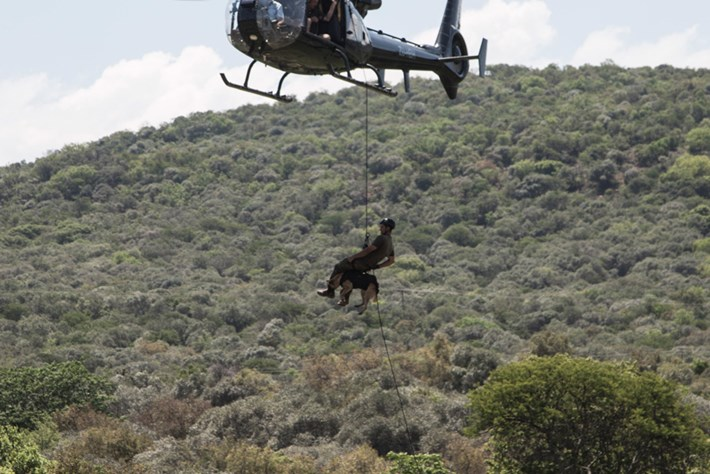 Dog Jumping Out Of Chopper 2014 11 28