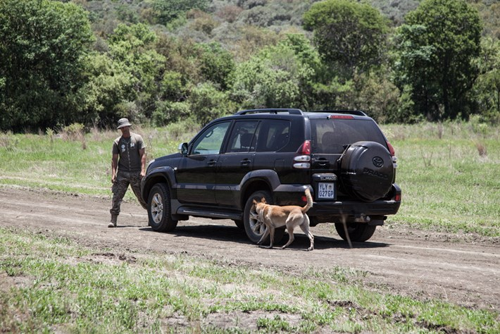 Sniffer Dog Poaching Contraband 2014 11 28