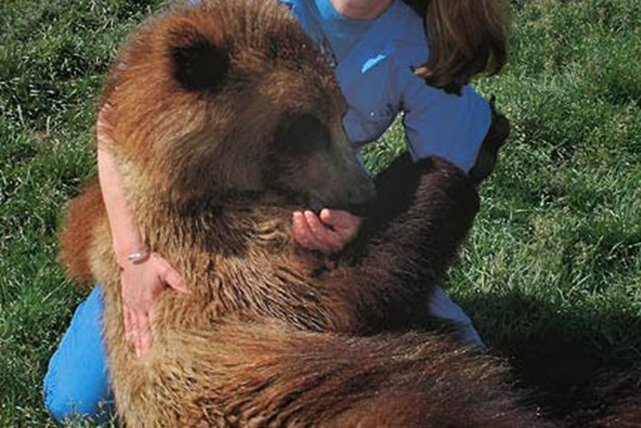 2014-12-01 lynne nelson bear The Wild Life
