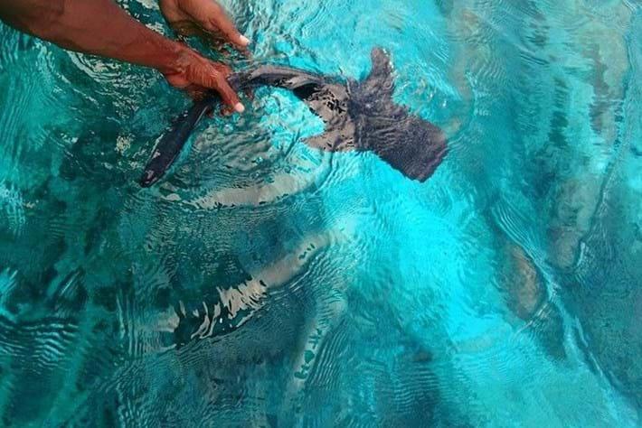 whale shark-release-2014-12-1