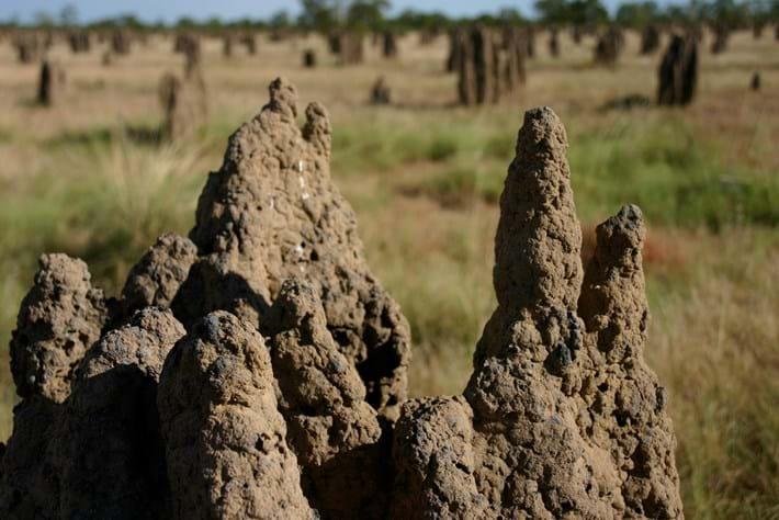 Termite Mound 2014 12 02