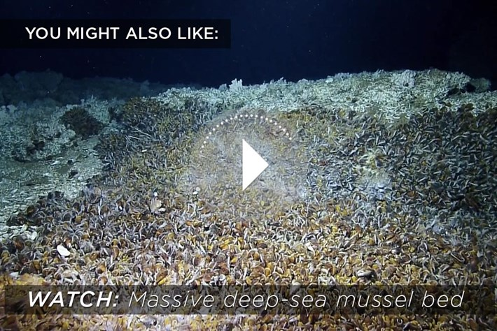2014 12 04 Mussel Bed Related Content