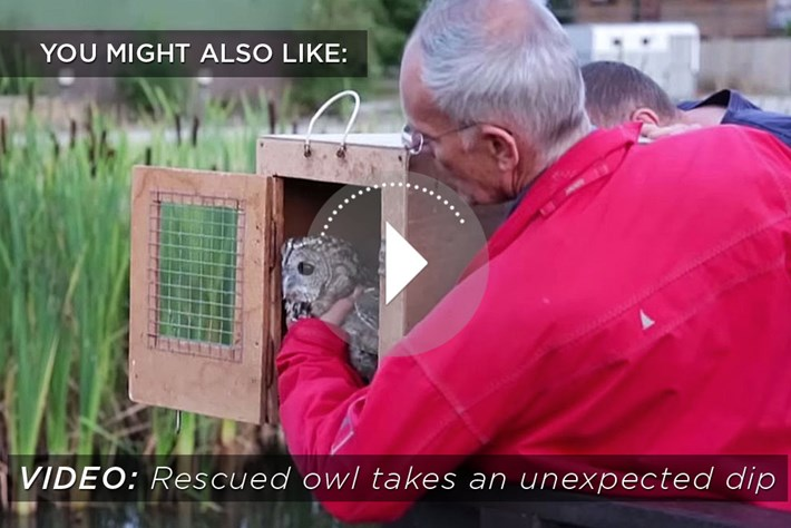 2014 12 05 Owl Release Related Content