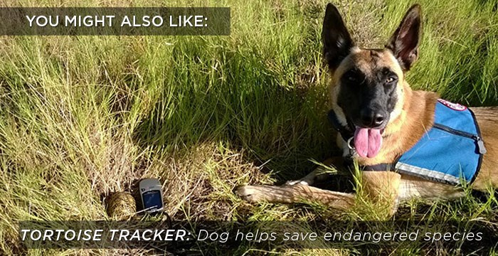 2014 12 08 Tortoise Tracker Dog Related Content
