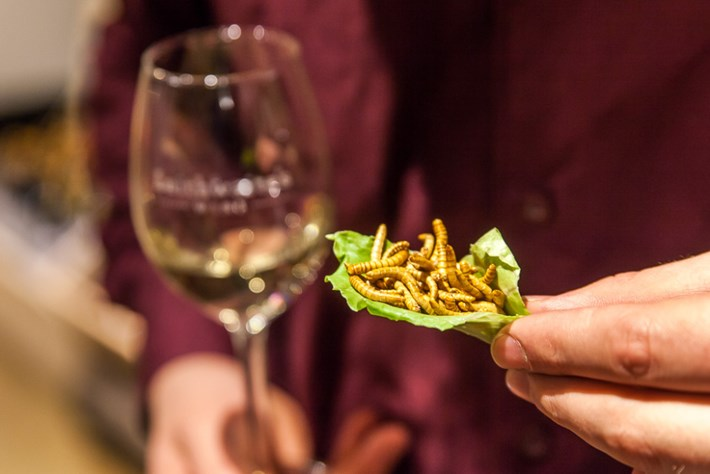 Bugs for dinner? This handy guide will help you pair them with the perfect wine