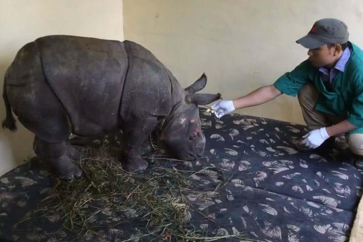 Rhino Rescue7 2014 12 12