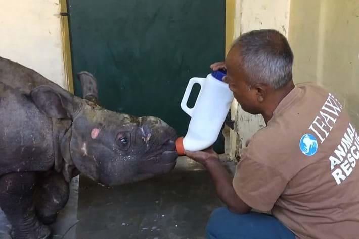Rhino Rescue8 2014 12 12
