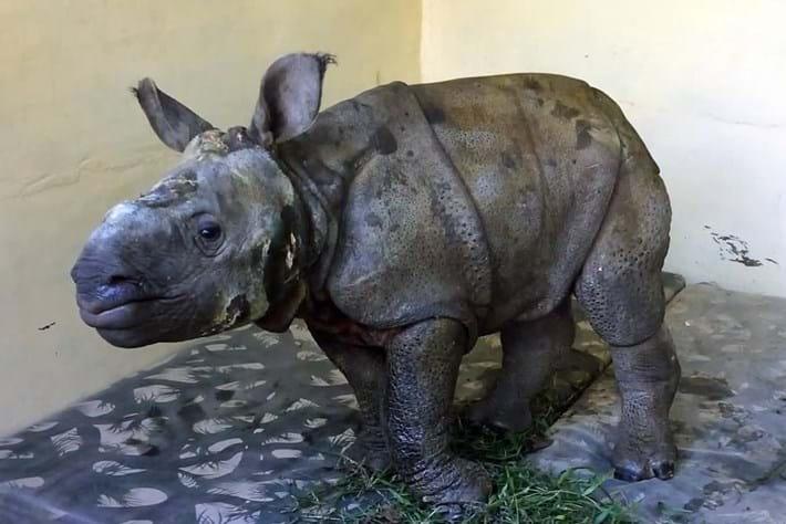 Rhino Rescue9 2014 12 12