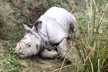 Rhino Resuce1 2014 12 12