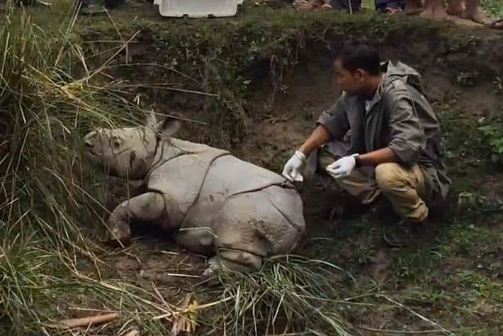 Rhino Rescue4 2014 12 12