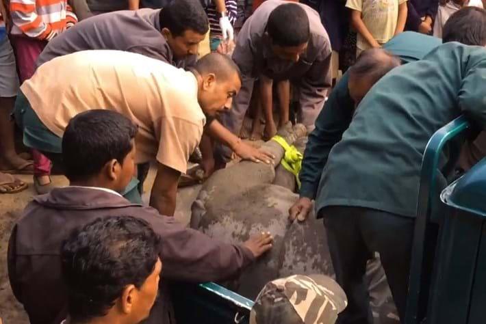 Rhino Rescue6 2014 12 12