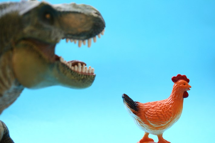 Dino And Chicken 2014 12 16