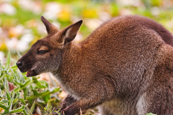 Wallaby High 2014 12 23