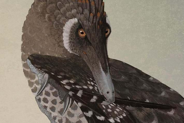 Feathers-velociraptor-2014-12-27