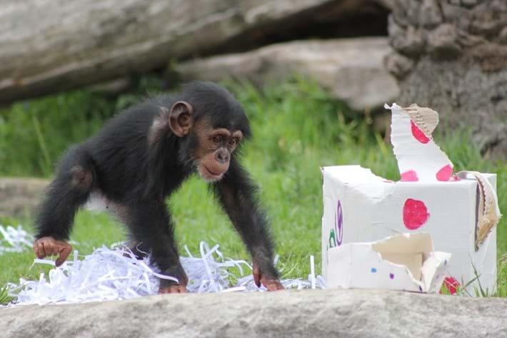 xmas animals-chimp 5-2014-1-25