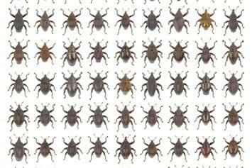 New Beetle Species Java_2015_01_05