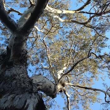 Separation tree 2015-01-05