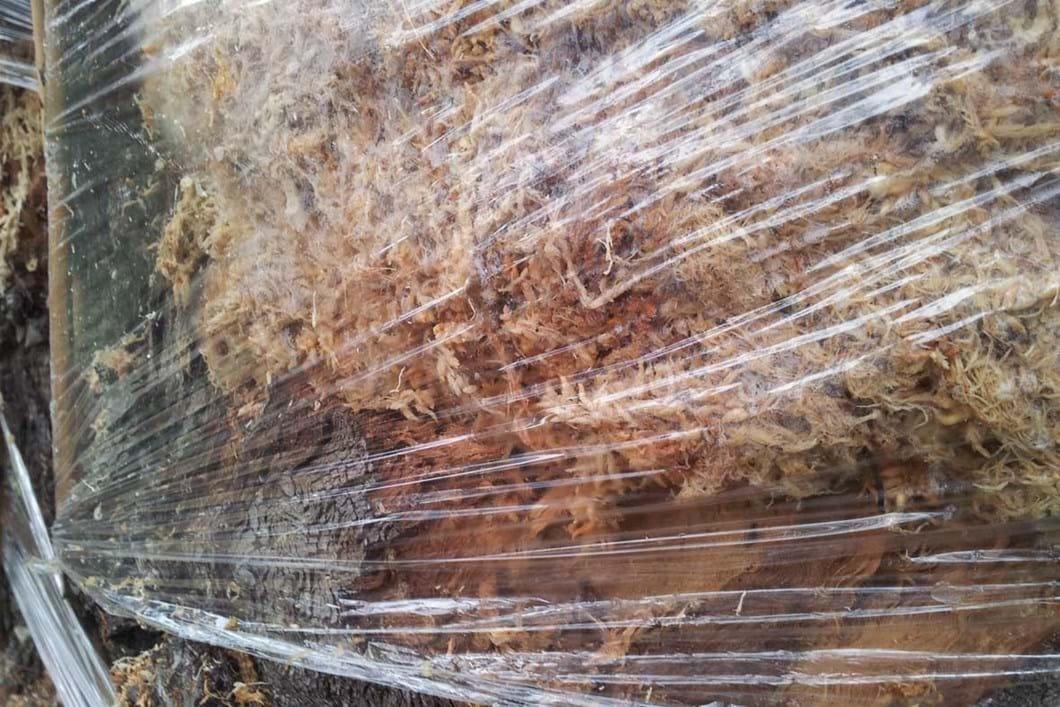 Plastic wrap over sphagnum moss close-up