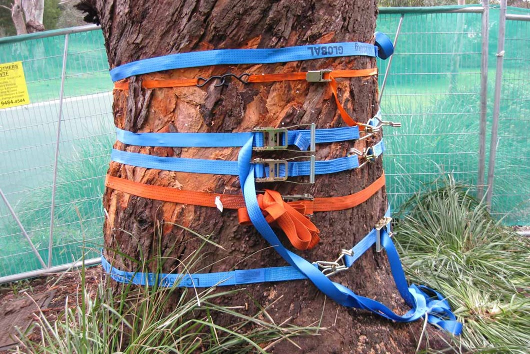 Strapping the bark