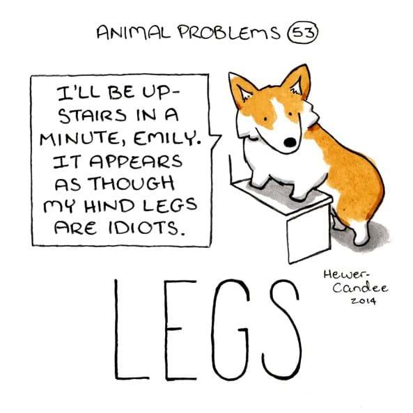 animal problems-legs-2015-1-12