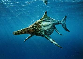 Dearcmhara Fossil 2015 01 12