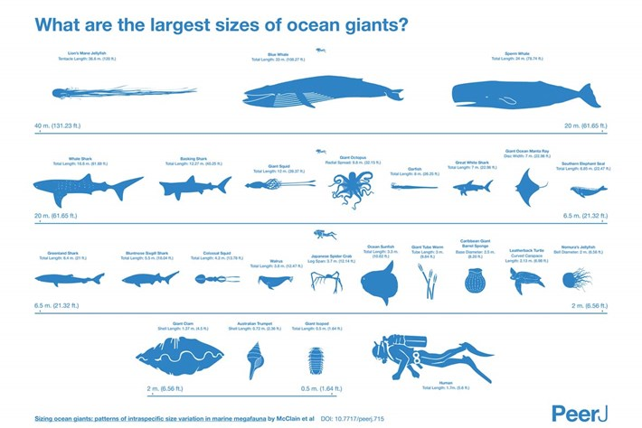 ocean giants-page-2015-1-13