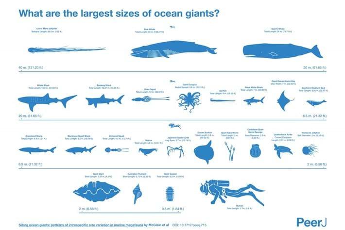ocean giants-page-2015-1-13